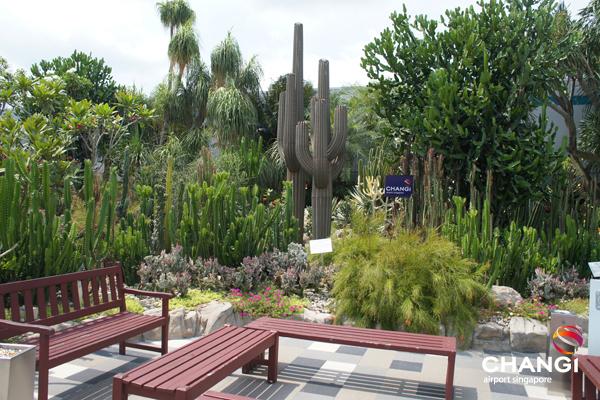 参照:http://www.changiairportgroup.com/cag/html/media-centre/media-gallery/nature-and-gardens.html